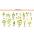 potted plants collection - set elements vector image