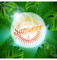 tropical plants and sunlight vector image vector image