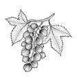 black currant with leaves sketch engraving vector image vector image