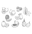 Exotic fruits pencil sketch icons vector image vector image