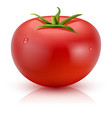 Realistic Tomato Isolated vector image
