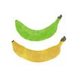 banana watercolor vector image