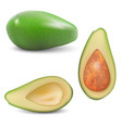 fresh fruit avocado vector image