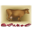 Cow and beef vector image vector image