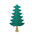 fir with cones isolated fir-tree on white vector image