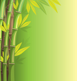 Green bamboo on green background vector image