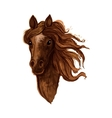 Sketch of brown arabian mare horse vector image vector image
