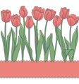 card with red tulips and place for an inscription vector image vector image