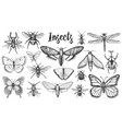 different insects set butterfly and dragonfly vector image vector image