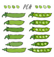 green pea pod healthy bio vegetarian food vector image vector image