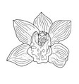 orchid hand drawn monochrome vector image vector image