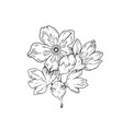 sakura flowers blossom bud hand drawn line ink vector image