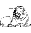 lion lying africa continuous line vector image