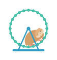 hamster in wheel cute pet on white background vector image