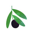 isolated flat of green branch vector image