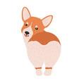 lovely pembroke welsh corgi funny adorable dog or vector image vector image