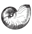 nautilus shell is shown in its natural form vector image vector image