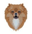 Portrait of pomeranian dog isolated on white vector image