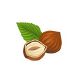 cartoon of whole and half of hazelnut vector image