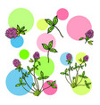 abstract background with red clover leaves and vector image vector image