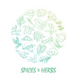 hand drawn spice and herbs bright vector image