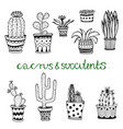 hand drawn succulent and cactuse set doodle vector image vector image