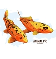 Orange Koi fishes vector image