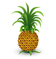 pineapple vector image vector image