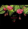 Tropical flower border