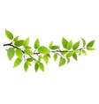 Small tree branch with green leaves vector image vector image