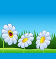 three daisies and ladybug vector image