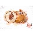 Watercolor peach sketch Fresh fruit vector image
