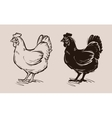 chicken logo farm poultry or hen fowl vector image vector image