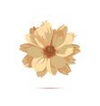 chrysanthemum flower floral vector image vector image