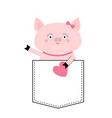 pig face head in pocket pink heart cute vector image