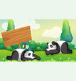 scene with two pandas in park vector image