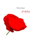 Template card with poppy vector image vector image
