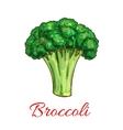 Broccoli vegetarian vegetable sketch icon vector image