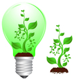 bulb and plant vector image vector image