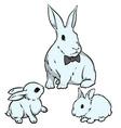 easter bunnies vector image vector image