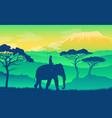 elephant in african savanna wild acacia