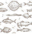 fish sketch pattern background seamless vector image