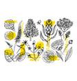 hand drawn vintage floral set sketch retro vector image