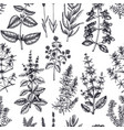 traditional provence herbs seamless pattern vector image