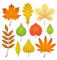 autumn leaves collection vector image