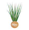 chives label with lettering vector image vector image