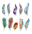 colorful detailed bird feathers vector image