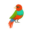 colorful tropical bird vector image vector image
