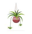 decorative houseplant planted in ceramic pot vector image