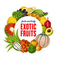 exotic fruits tropical citrus cantaloupe harvest vector image vector image